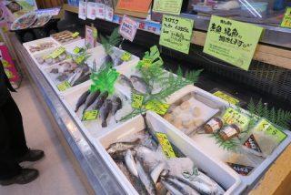 ようやく本命のお魚たち