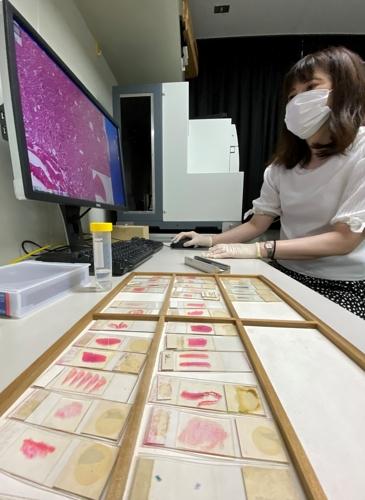 AFIP返還資料のスライド標本(手前)をデータベース化している荒木さん=長崎市、長崎大原爆後障害医療研究所